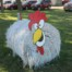 Brown County Fair, Aberdeen, SD 2016 - Chicken